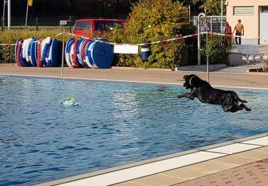 Hundeschwimmen wird immer beliebter.